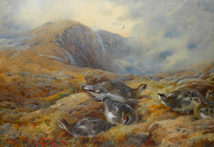 Art Prints of Danger Aloft Ptarmigan by Archibald Thorburn