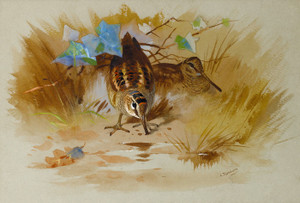 Art Prints of Woodcock in a Sandy Hollow by Archibald Thorburn