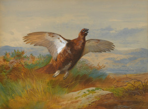 Art Prints of Red Grouse in Flight by Archibald Thorburn