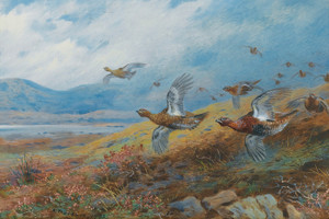 Art Prints of Driven Grouse by Archibald Thorburn