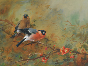 Art Prints of Bullfinches and Pyrus Japonica by Archibald Thorburn