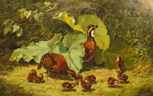 Art Prints of Quail and Young by Arthur Fitzwilliam Tait