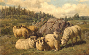 Art Prints of Sheep Reposing by Arthur Fitzwilliam Tait