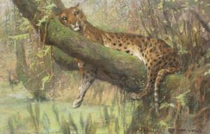 Art Prints of A Leopard Resting by Arthur Wardle