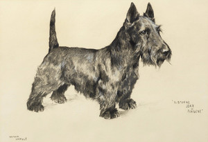 Art Prints of Albourne Jean of Firdene, Scottish Terrier by Arthur Wardle