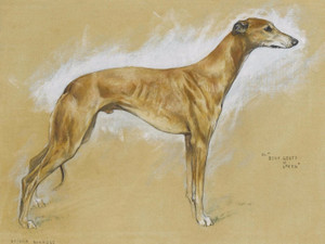 Art Prints of Champion Greyhound Beau Geste of Loven by Arthur Wardle