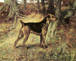 Art Prints of Champion Dumbarton Lass, Airedale Terrier by Arthur Wardle
