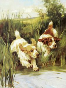 Art Prints of Cocker Spaniels by Arthur Wardle
