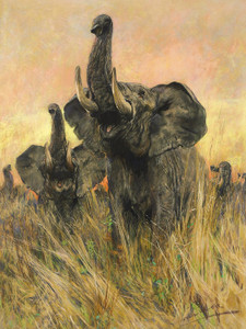 Art Prints of Elephants Sight by Arthur Wardle
