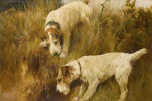 Art Prints of Terriers Gone to Ground by Arthur Wardle