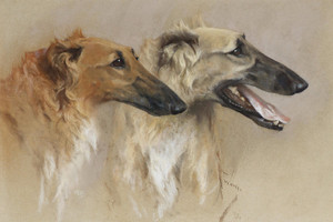 Art Prints of Head Study of Two Borzoi by Arthur Wardle