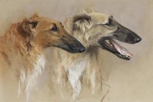 Art Prints of Head Study of Two Borzoi by Arthur Wardle