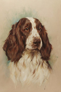 Art Prints of Head of an English Springer Spaniel by Arthur Wardle