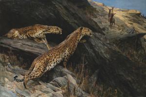 Art Prints of Indian Leopards by Arthur Wardle