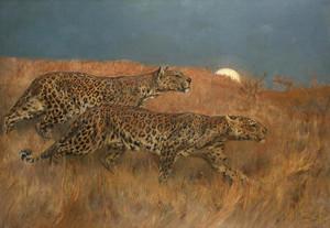 Art Prints of Leopards Stalking Prey by Arthur Wardle