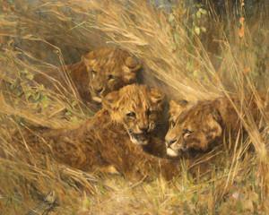Art Prints of Lion Cubs by Arthur Wardle