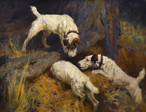 Art Prints of Rabbiting by Arthur Wardle