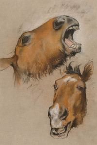 Art Prints of Study of a Horse by Arthur Wardle