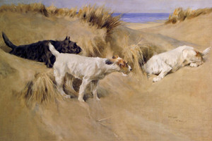 Art Prints of Terriers in the Sand Dunes by Arthur Wardle
