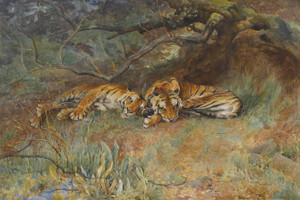 Art Prints of Two Tigers at Rest by Arthur Wardle