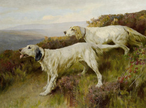 Art Prints of Two English Setters on a Moor by Arthur Wardle