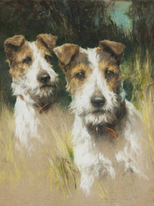 Art Prints of Two Wire-Haired Fox Terriers by Arthur Wardle