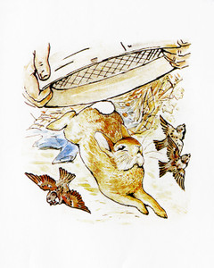 Art Prints of Peter Almost Caught by a Sieve by Beatrix Potter