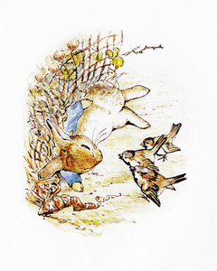 Art Prints of Peter Comforted by Three Sparrows by Beatrix Potter