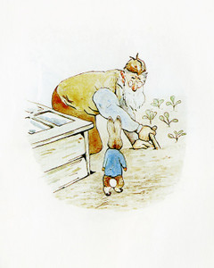 Art Prints of Peter Runs into Mr. Mcgregor by Beatrix Potter