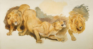 Art Prints of Study for Daniel in the Lion's Den by Briton Riviere
