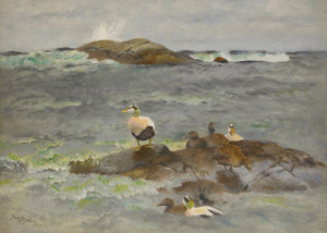 Art Prints of Eider Ducks on the Islet by Bruno Liljefors