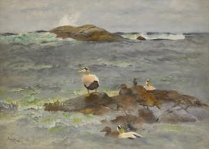 Art Prints of Eider Ducks on the Islet by Bruno Liljefors