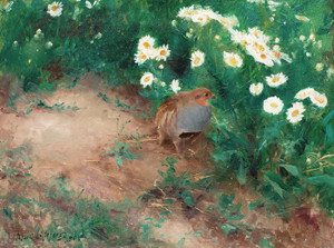 Art Prints of Grey Partridge with Ox-Eyed Daisies by Bruno Liljefors