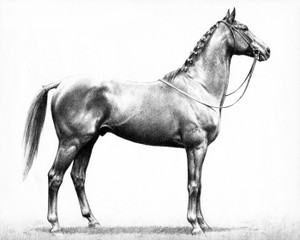 Art Prints of Stymie, the People's Horse by C.W. Anderson