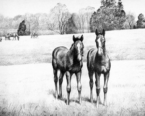 Art Prints of Two Yearlings by C.W. Anderson