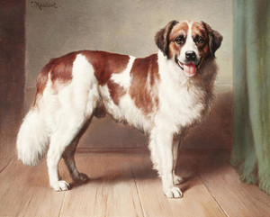 Art Prints of Portrait of a St. Bernard by Carl Reichert