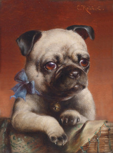 Art Prints of Young Pug by Carl Reichert