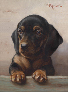Art Prints of Young Dachshund by Carl Reichert