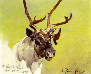 Art Prints of Caribou Head by Carl Rungius