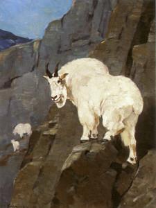 Art Prints of Mountain Goat by Carl Rungius