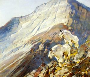 Art Prints of Mountain Goats by Carl Rungius