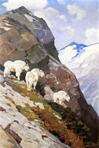 Art Prints of Mountain Goats II by Carl Rungius