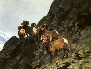 Art Prints of Rams by Carl Rungius