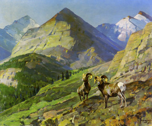 Art Prints of Two Mountain Sheep by Carl Rungius