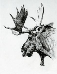 Art Prints of Young Bull by Carl Rungius