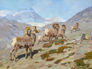 Art Prints of Bighorn Sheep, Nigel Pass, Alberta, 1919 by Carl Rungius