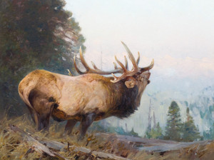 Art Prints of Bugling Elk by Carl Rungius