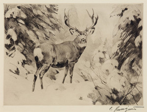 Art Prints of Mule Deer by Carl Rungius