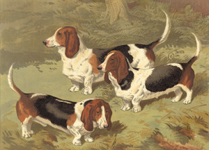 Art Prints of Basset Hounds by Vero Shaw