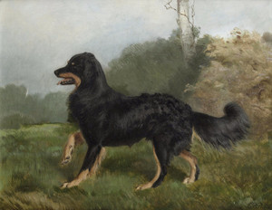 Art Prints of Sharp, Smooth Coated Border Collie by Charles Burton Barber